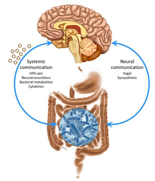Asse Cervello-Intestino